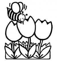Цветы тюльпаны и пчелка