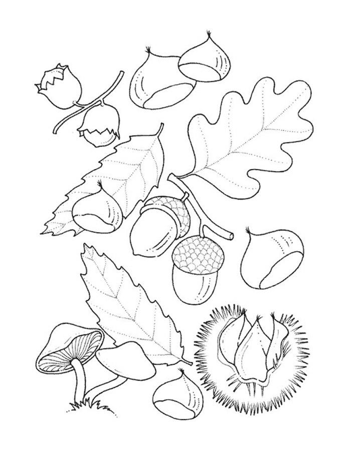 Детские раскраски для девочек и мальчиков, листья, желуди ...