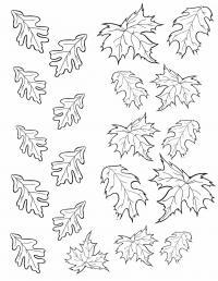 Картинки на рабочий стол грибы в лесу осенью