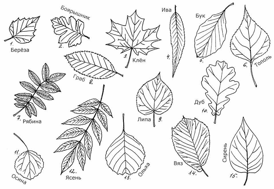Картинки раскраски осенние деревья