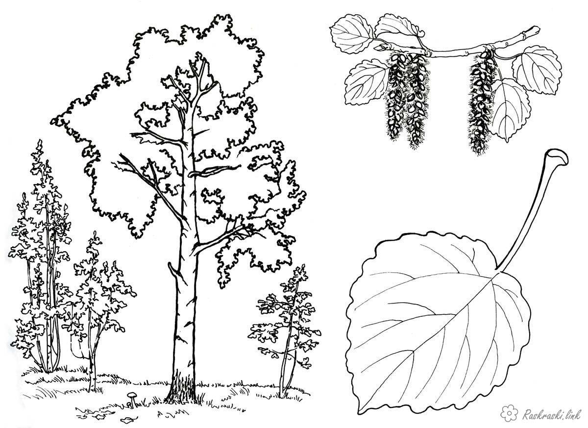 Раскраски деревьев 101