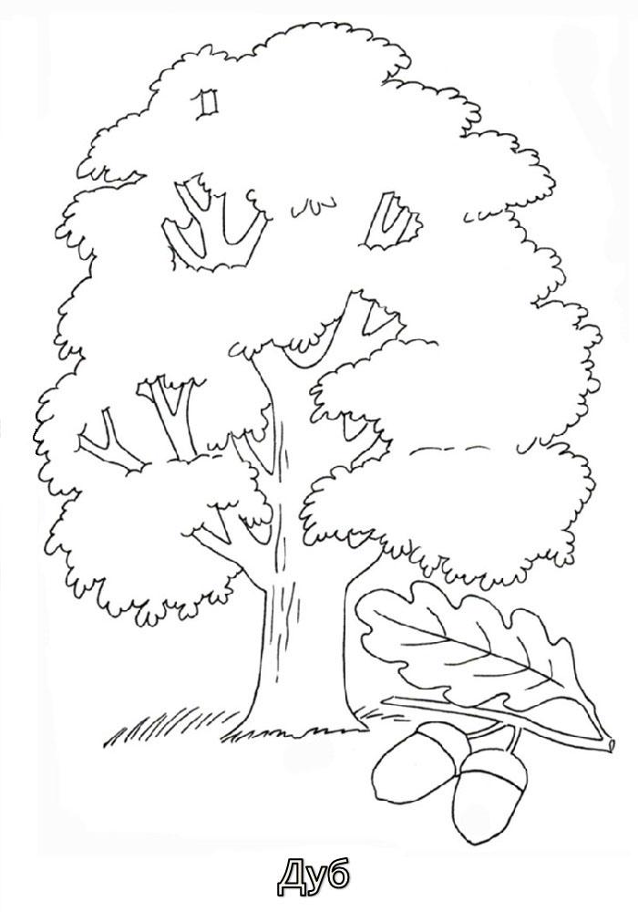 Деревья раскраска дуб