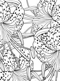 Дивный сад. раскраска-антистресс