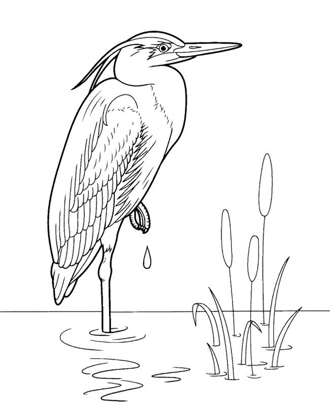 Жар птица раскраска рисунок