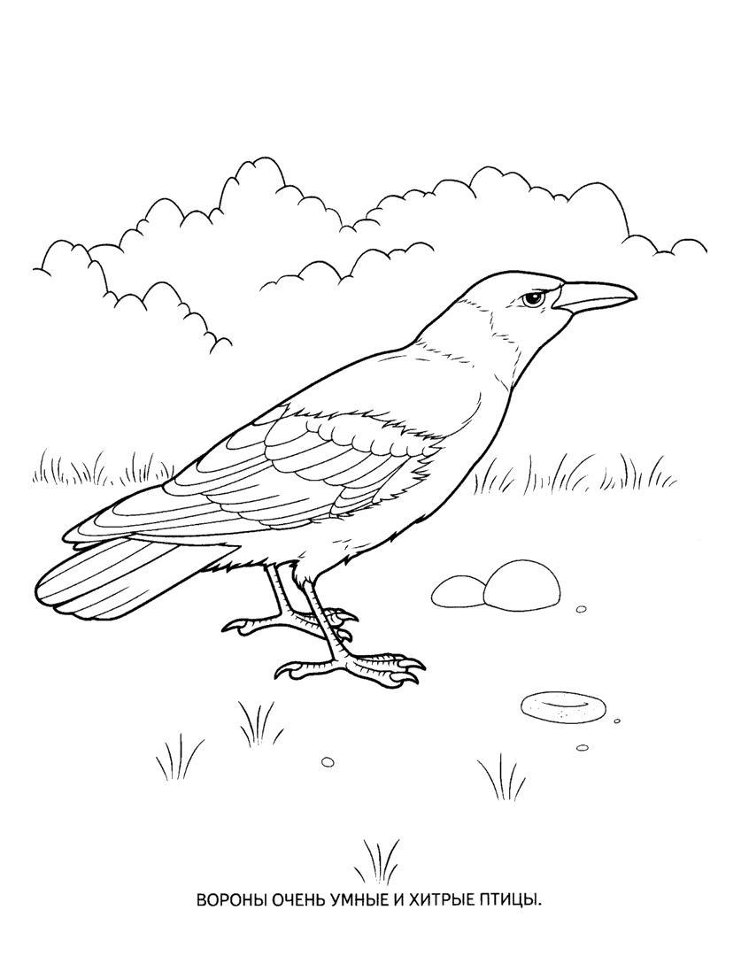 Раскраска ворон. раскраска раскраска ворона, разукрашка ворон, картинка ворон для <strong>картинка</strong> детей, рисунки животных для раскрашивания, птица ворон