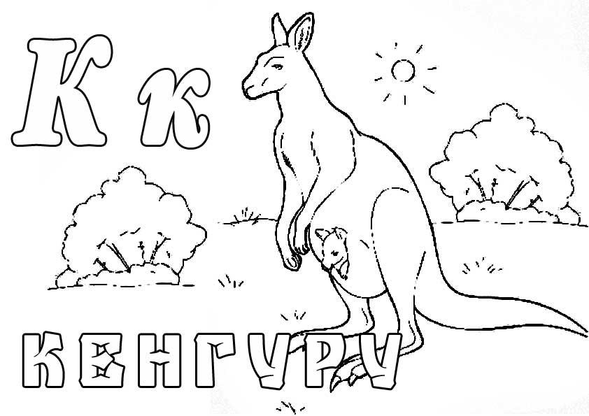 Раскраска кенгуру