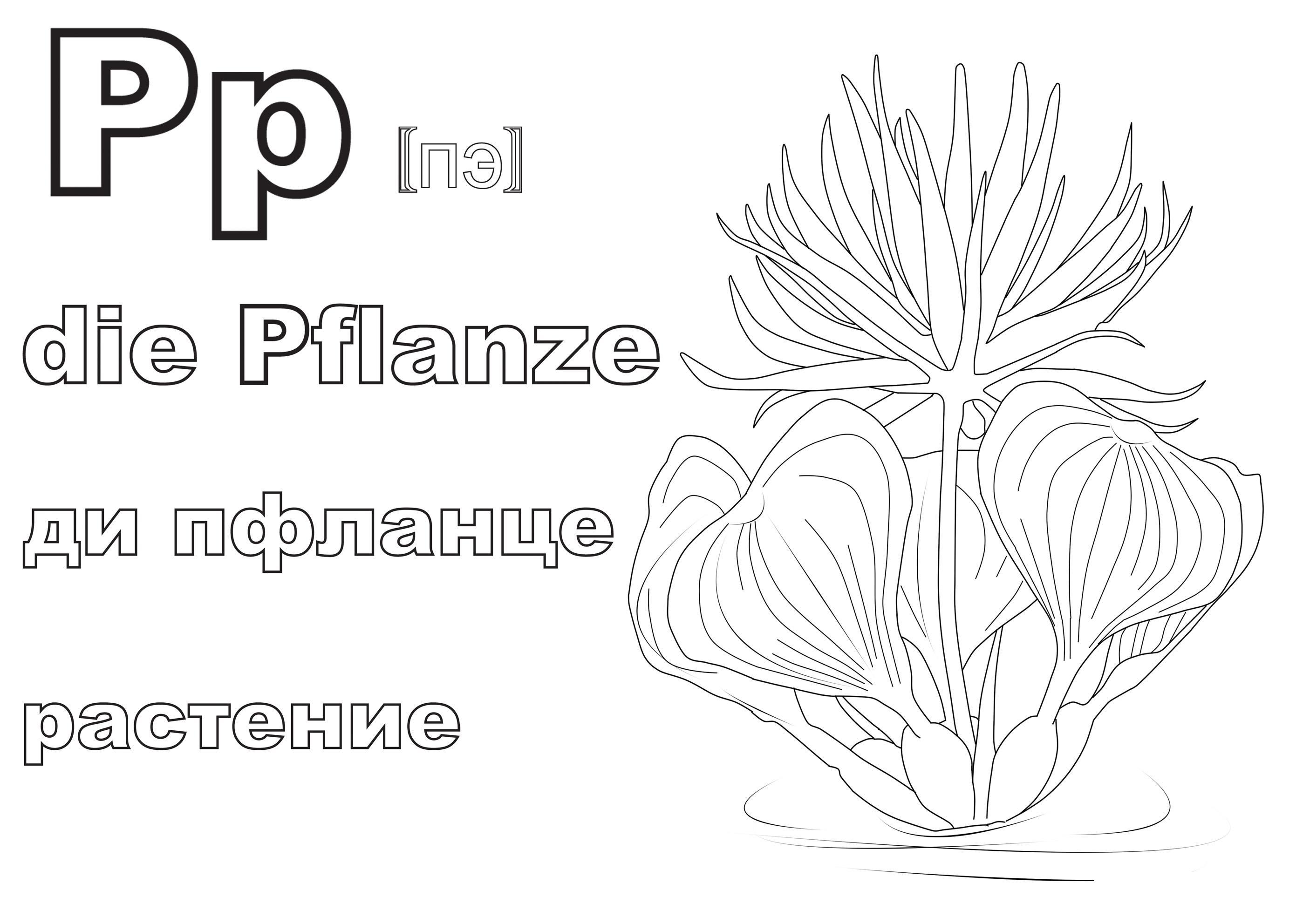 Немецкий алфавит в раскрасках, ди пфланце, растение