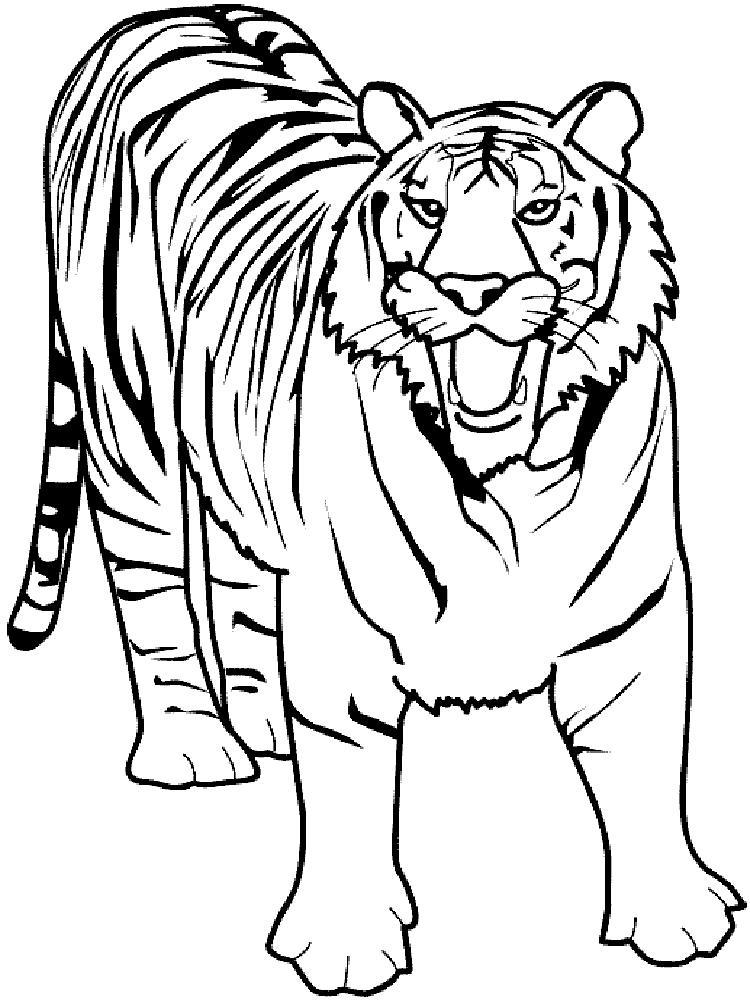 Скачать или распечатать раскраску, рычащий тигр