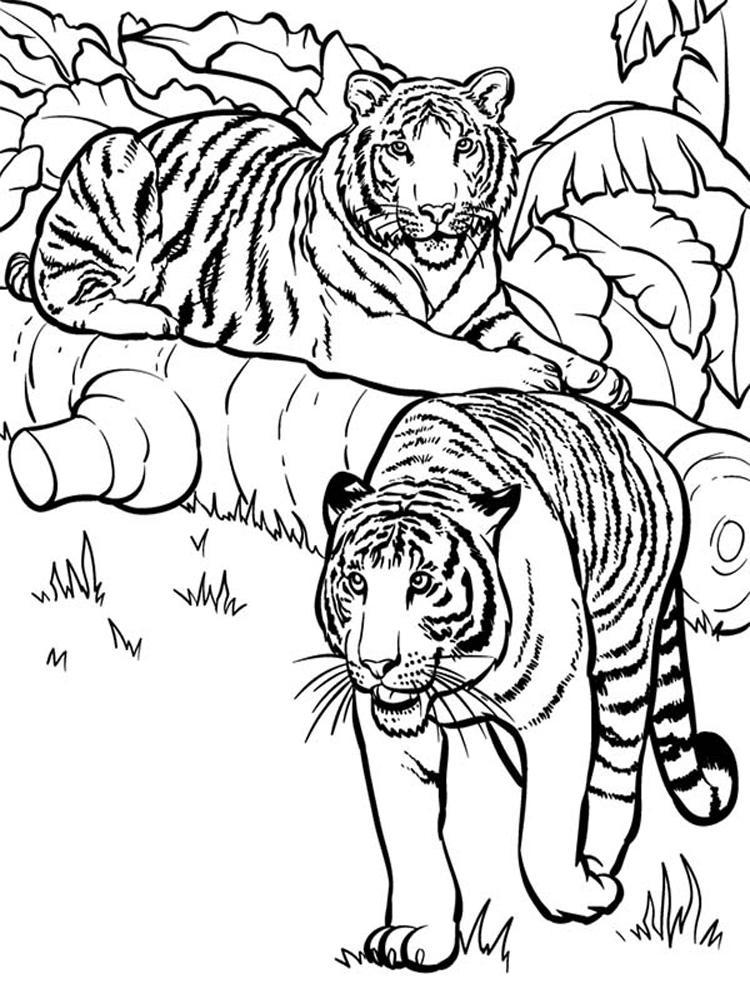 Скачать или распечатать раскраску, тигры