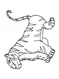 Скачать или распечатать раскраску, тигр