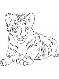 Скачать или распечатать раскраску, лежащий тигр