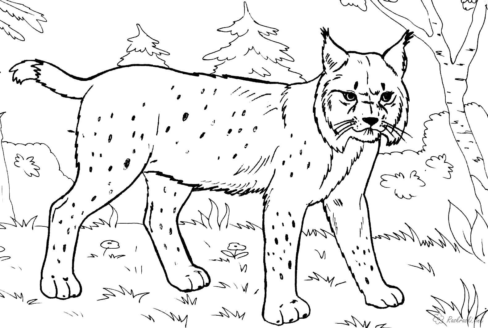 Раскраски животных на сайтах
