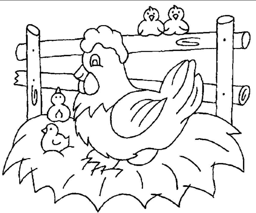 Скачать или распечатать раскраску, курица на насесте