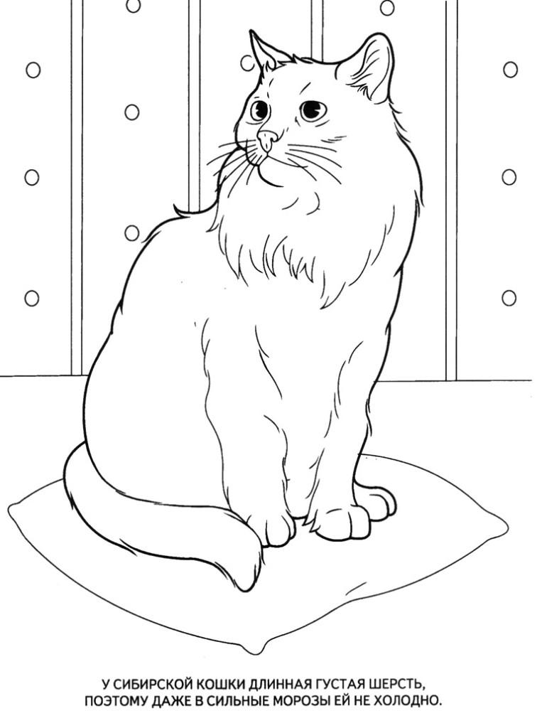Картинки раскраски животные, сибирская кошка