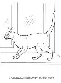 Картинки раскраски животные, сиамская кошка