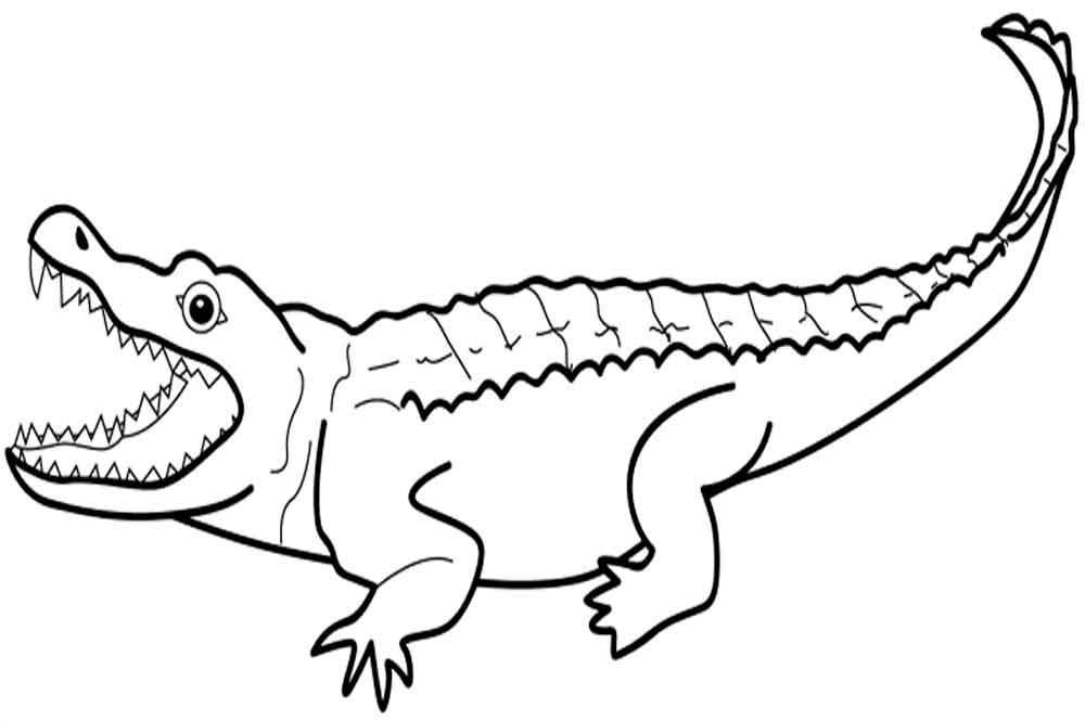 Крокодил раскраски распечатать