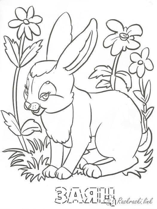 раскраски лесные животные раскраски для детей заяц лес