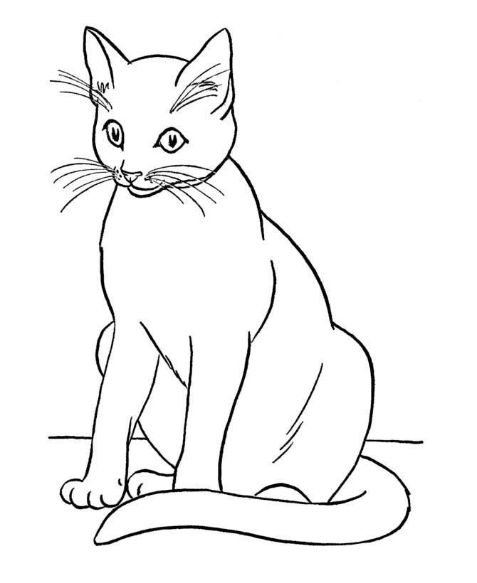 Раскраска сиамский кот