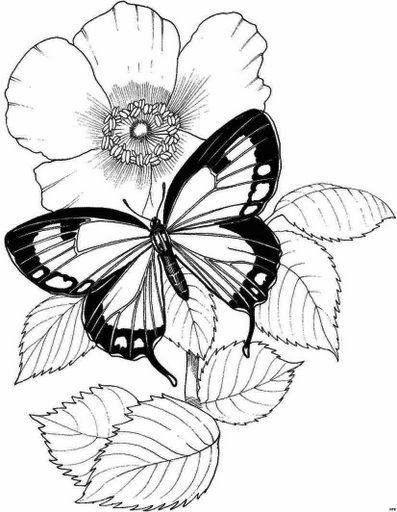 Рисунки для витражных красок, бабочка на цветке