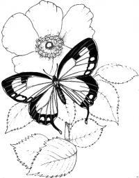 Картинки для витражных красок цветы, бабочка на цветке шиповника