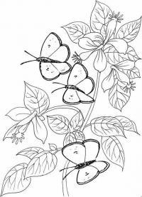 Картинки для витражных красок цветы, бабочки на цветах
