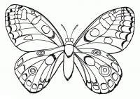 Бабочка-раскраска