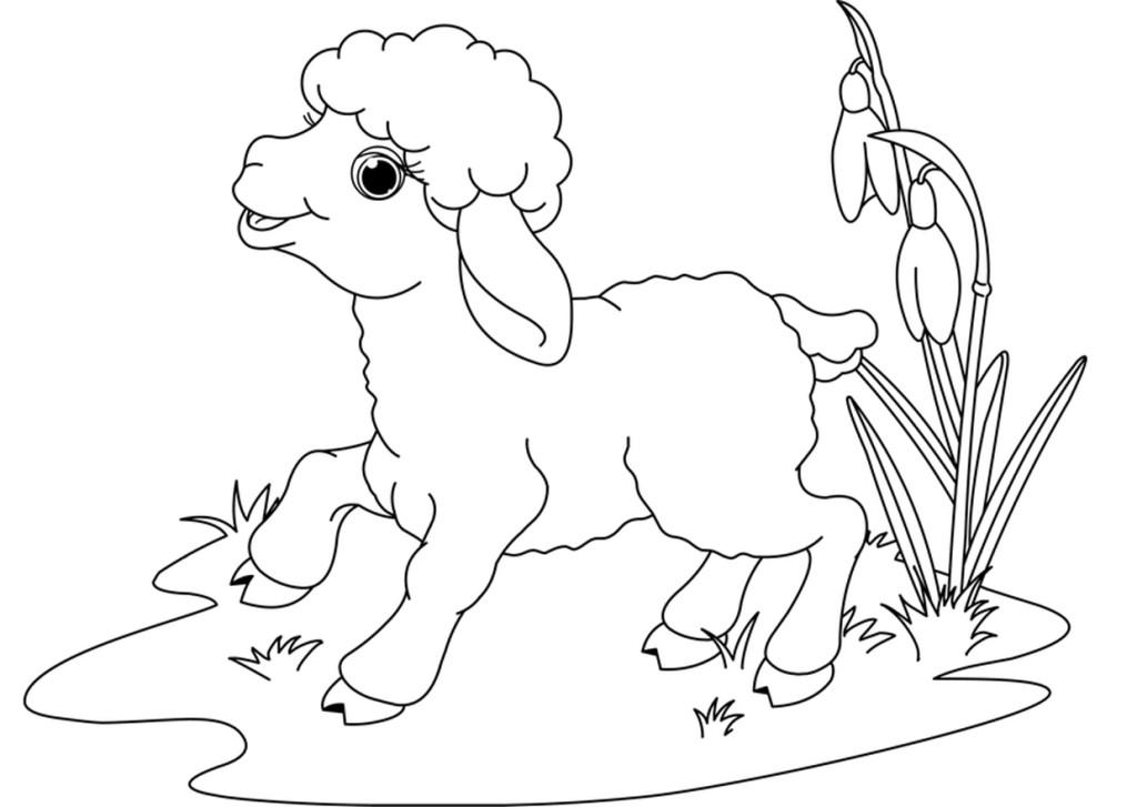 Раскраски для малышей скачать бесплатно, распечатать, барашек