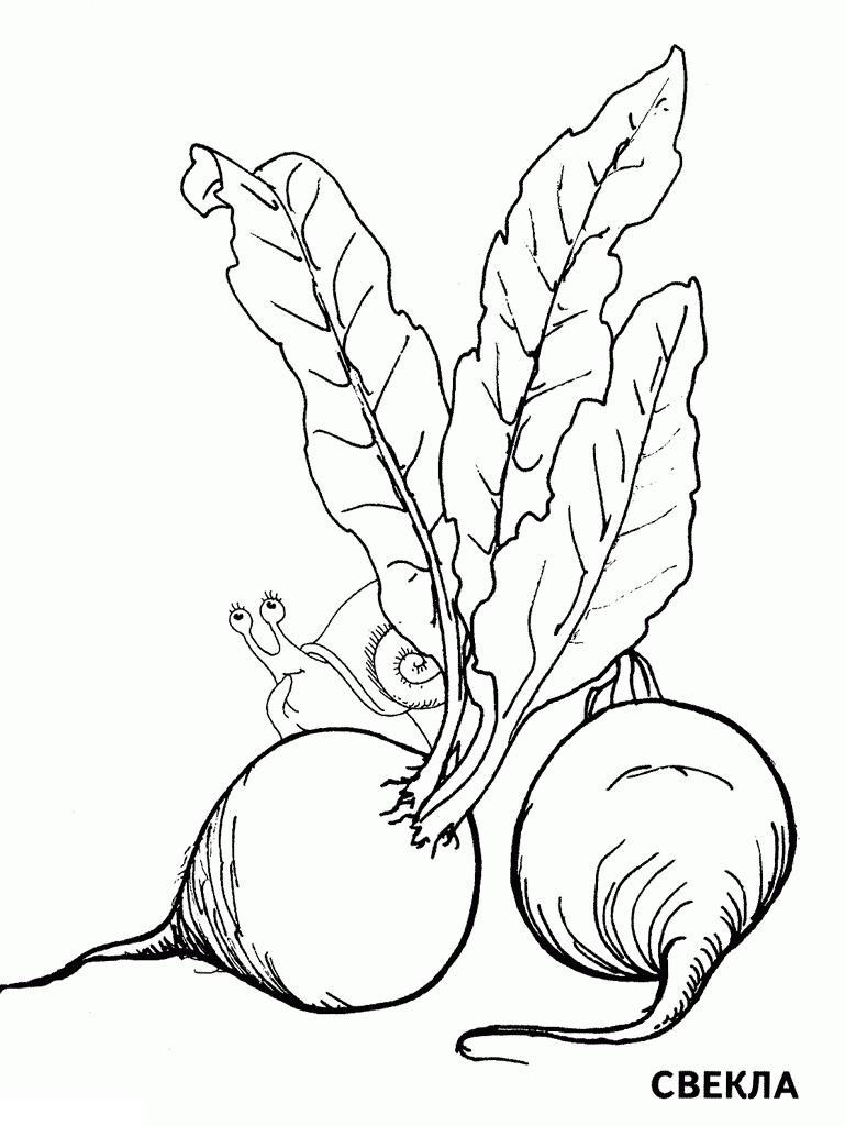 Раскраски овощей. свекла. детский сайт раскрасок. улитка