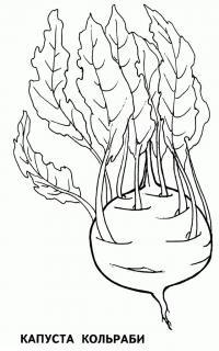 Раскраска овощ. скачать бесплатно, капуста кольраби