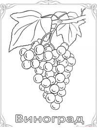 Карточки-раскраски для детей -фрукты и овощи, виноград