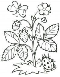 Раскраски растения детская раскраска растения