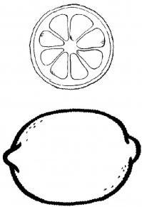 Скачать или распечатать раскраску распечатать скачать, лимон целый в разрезе