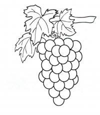 Скачать или распечатать раскраску распечатать скачать, виноград
