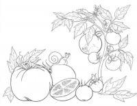 Детские раскраски для девочек и мальчиков, куст помидор, улитка