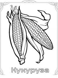 Карточки-раскраски для детей -  кукуруза