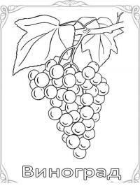 Карточки-раскраски для детей - ягоды, виноград