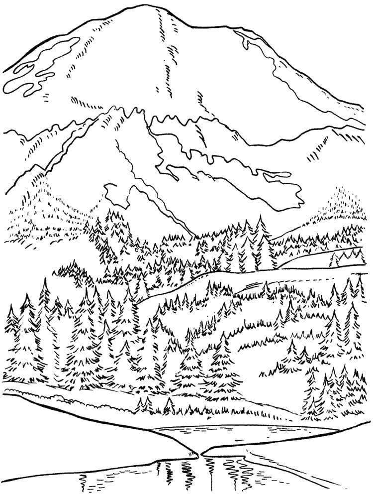 Скачать или распечатать раскраску распечатать скачать, хвойный лес в горах