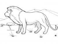 Раскраски горы лев, горы, деревья, саванна, дикие животные