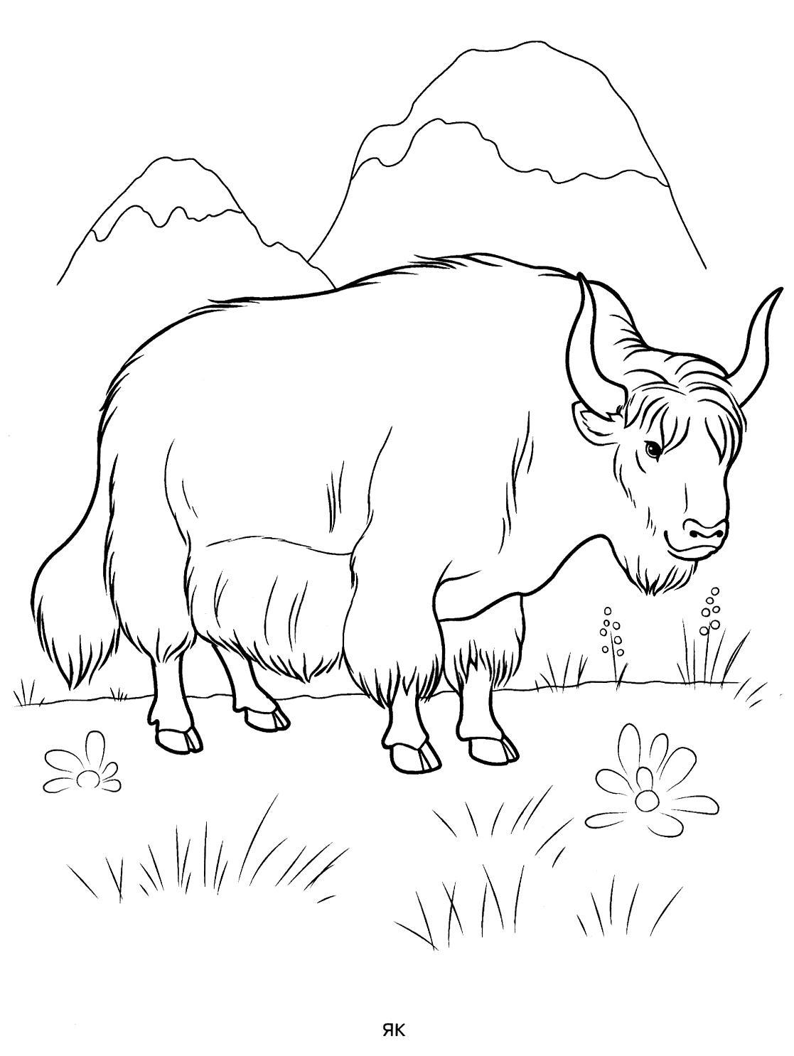 Раскраска як. раскраска пастбище, горы, скачать раскраску, бык, картинки для детей