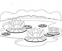Цветение лотосов на озере. рисунок раскраска детям.