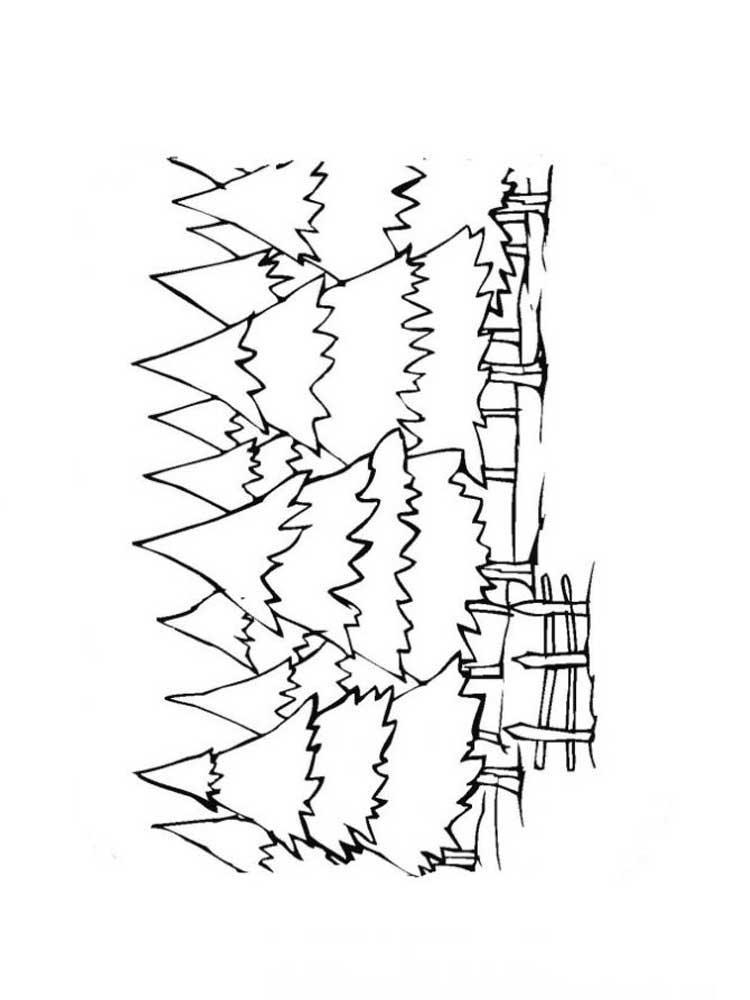 Скачать или распечатать раскраску распечатать скачать, еловый лес