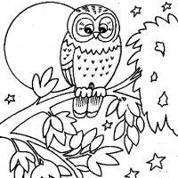 Картинки раскраски, сова на ветке