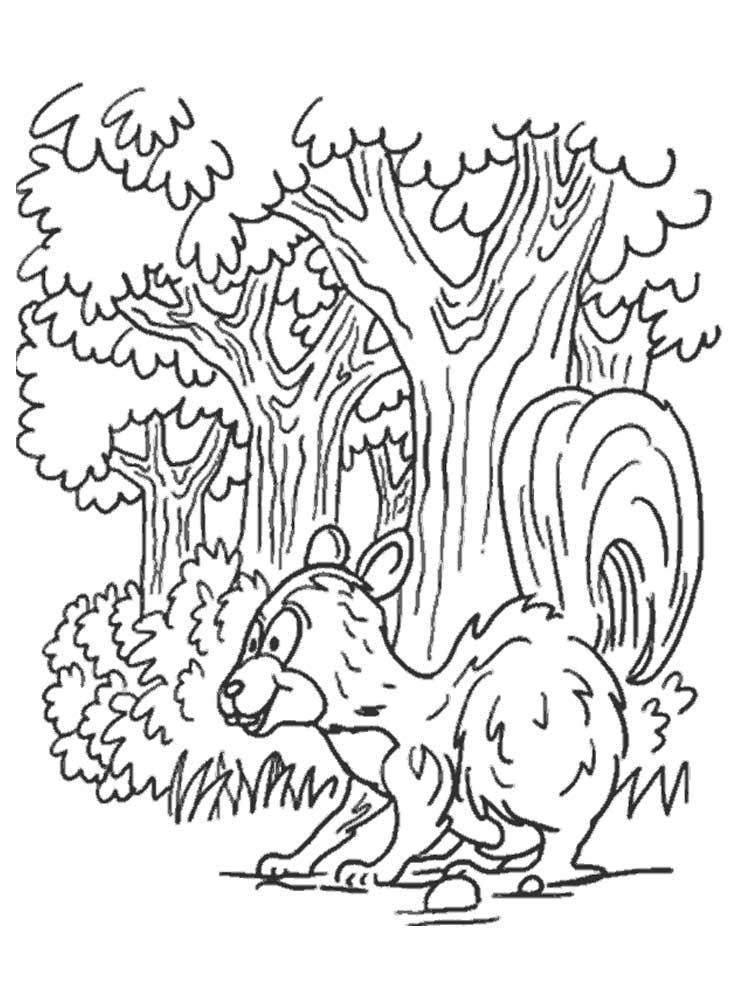 Скачать или распечатать раскраску распечатать скачать, белка в лесу