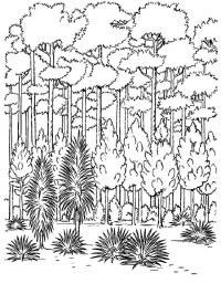 Скачать или распечатать раскраску распечатать скачать, тропический лес