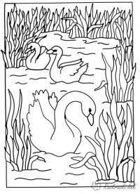 Раскраски лес и пейзажи раскраска пейзаж лебеди,озеро,камыши,природа
