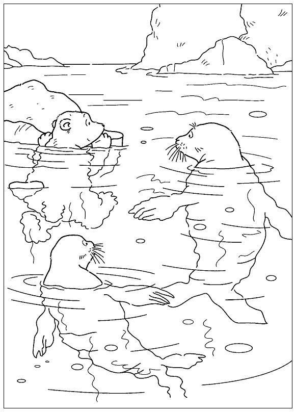 Раскраска ларс и тюлени. раскраска раскраска море, разукрашка для детей бесплатно