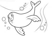 Раскраски морской природа подводный мир морской тюлень
