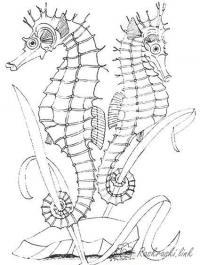 Раскраски морской природа подводный мир морской конек