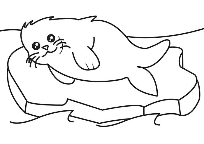 Раскраски морской котик для детей