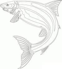 Раскраски подводный мир раскраска рыба